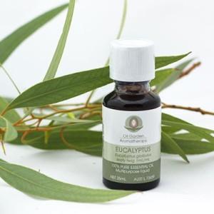 ess-oil-eucalyptus-1-400x400